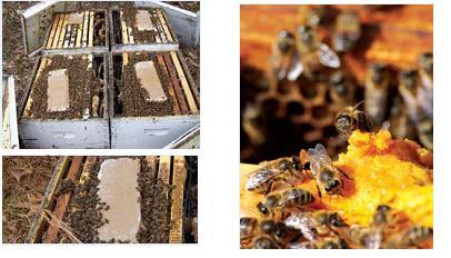 feed bee